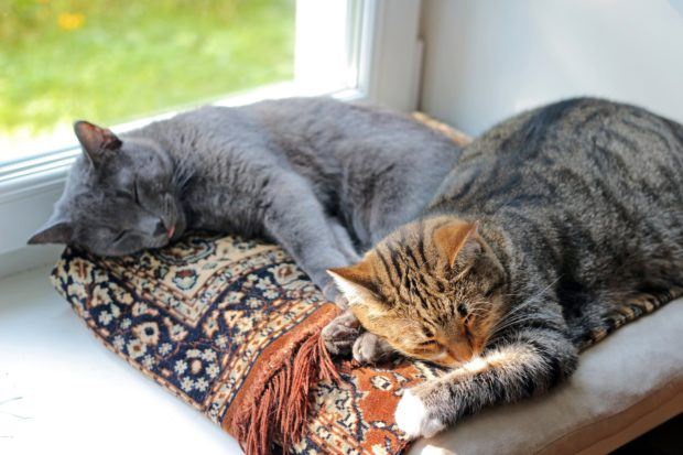 Bringing up House cat happily in your home